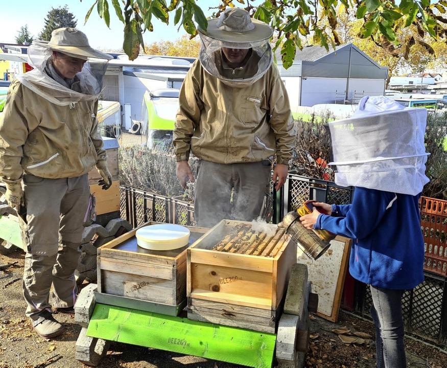 Im Winter fressen die Bienen den gesammelten Honig