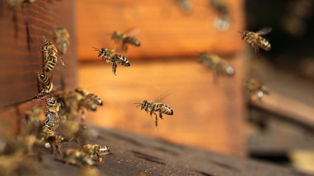 """""""Eine Frage der Haltung"""" : Doku über das Bienensterben"""