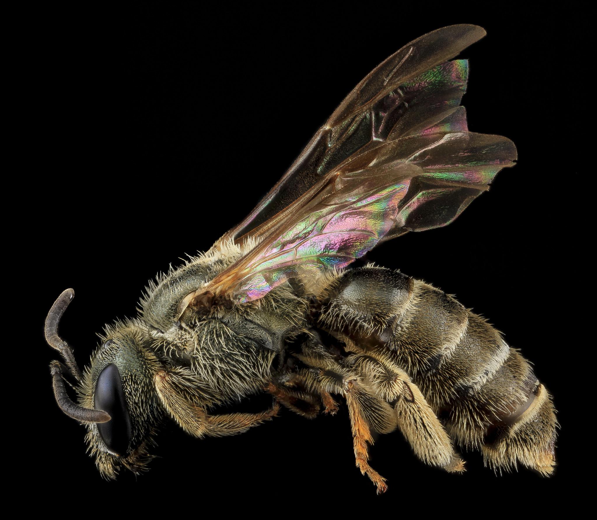 Fühler bei Bienen stehen für Sozialverhalten und Kommunikation