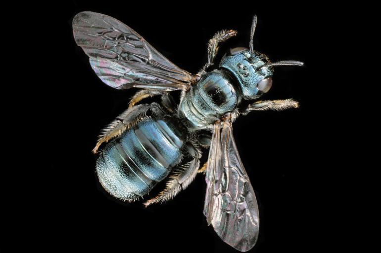 Soziale Bienen entstehen aus Fürsorge für Nachkommen