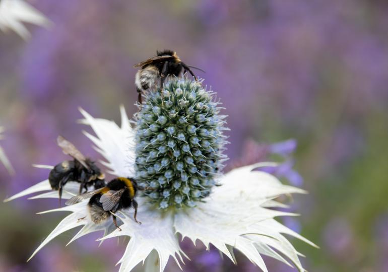 Pflanzenvielfalt wichtig für Bienenvielfalt