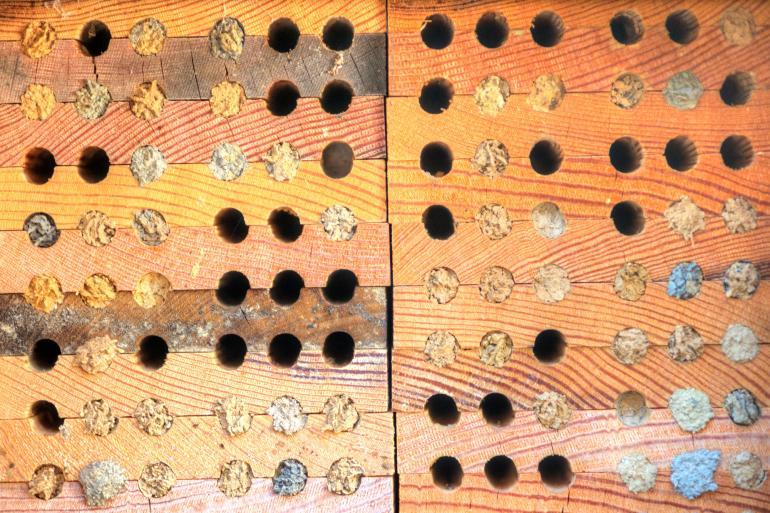 Bienen und ihre Bakterien