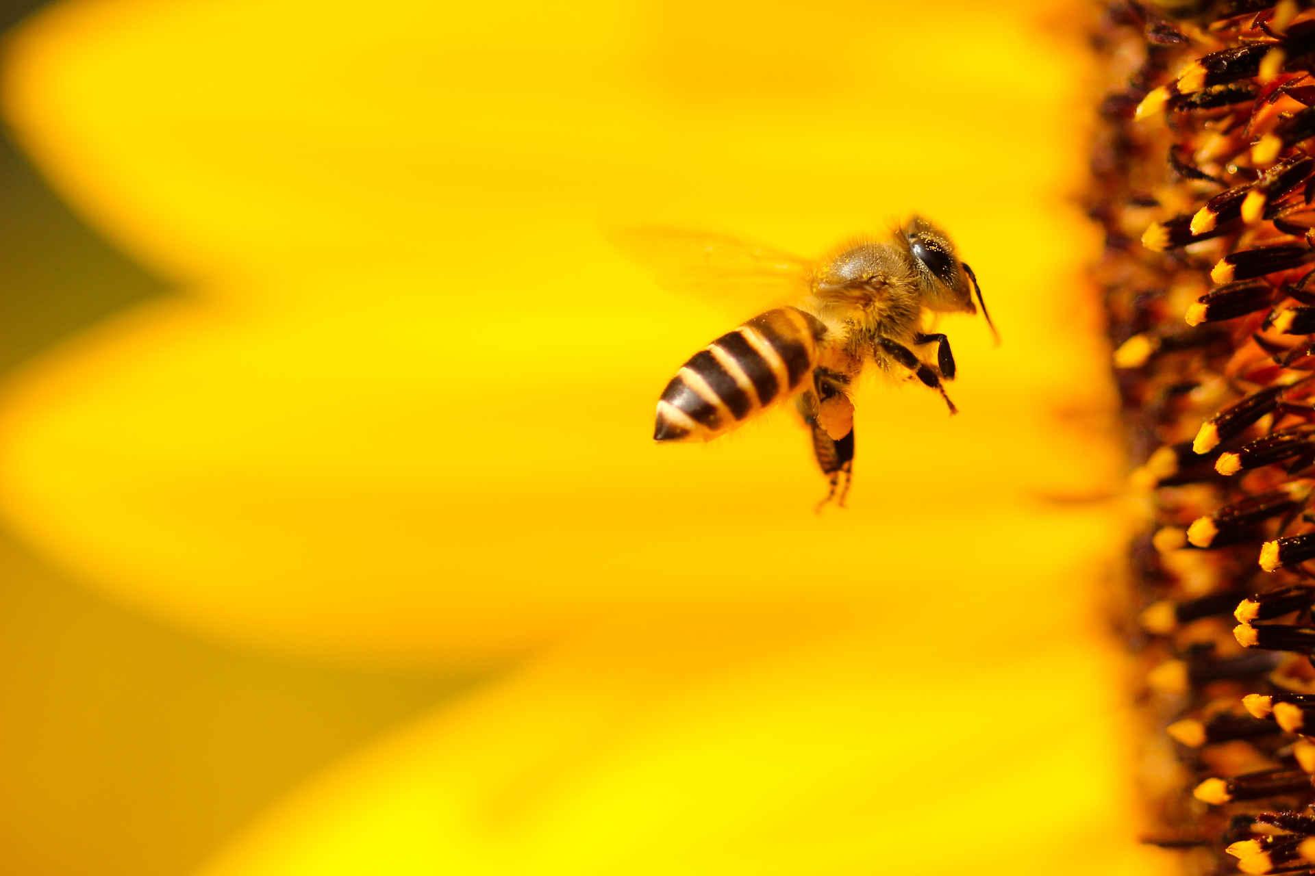 7 Dinge, mit denen Du Bienen helfen kannst
