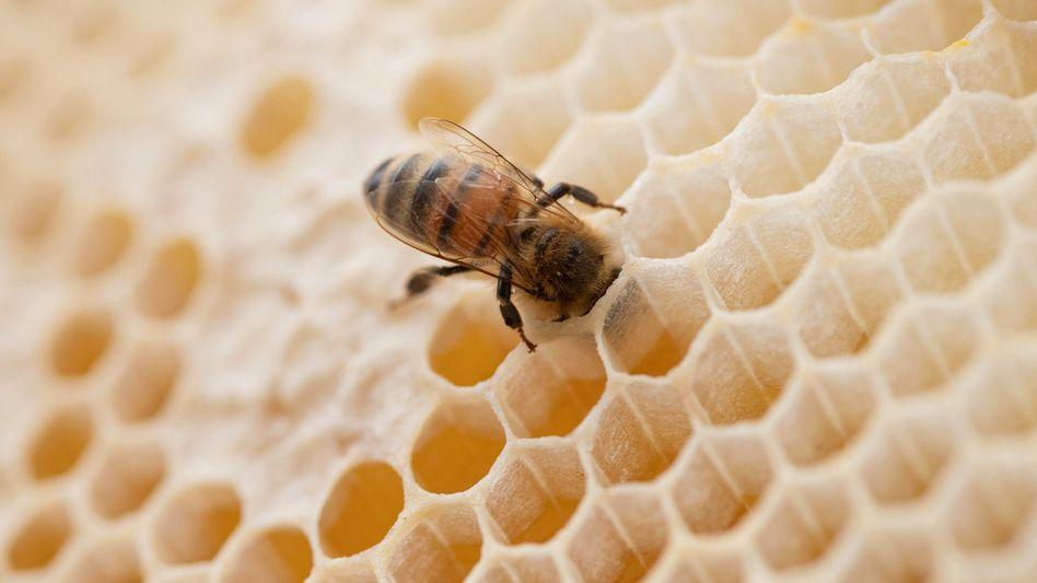 Insektensterben: Das tödliche Sommerloch