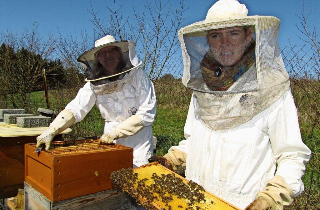 Imker in Waldenbuch: Den Bienen geht die Puste aus
