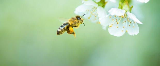 5 einfache Ideen, wie ihr Bienen schützen könnt