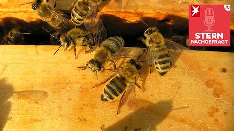 Warum es Bienen in der Stadt besser geht als auf dem Land
