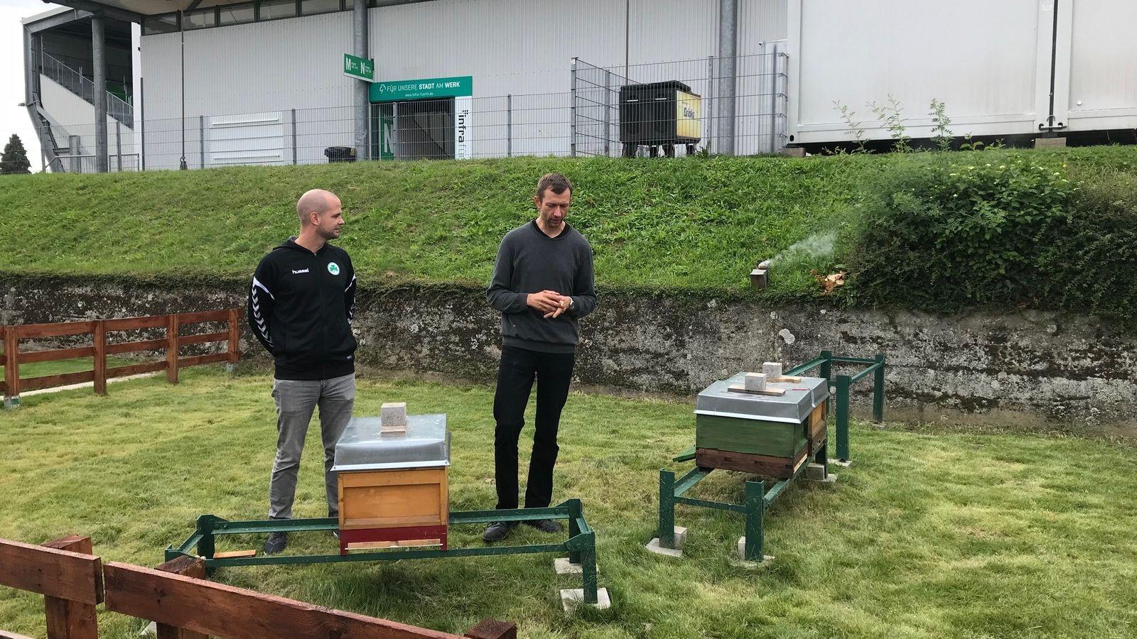 Spielvereinigung Greuther Fürth siedelt Bienen im Stadion an