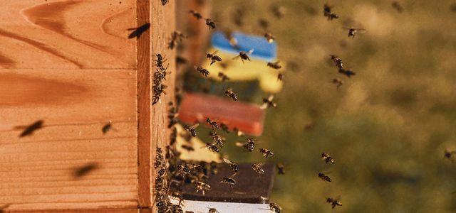 Imkern lernen für Anfänger:innen: So wirst du zum Bienenretter