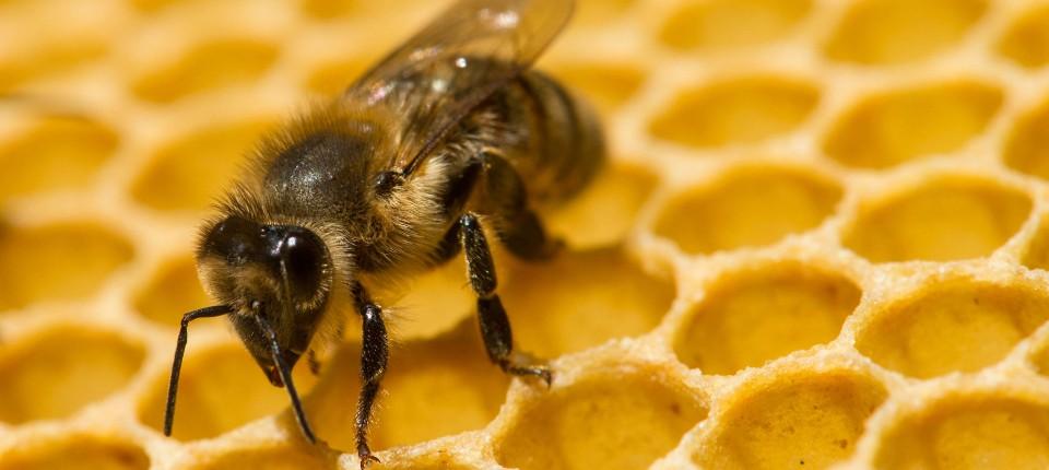 Intelligente Tiere: Rechnende Bienen und eitle Fische