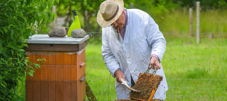 Bienenpopulation in Hessen: Wieder mehr Honigbienen