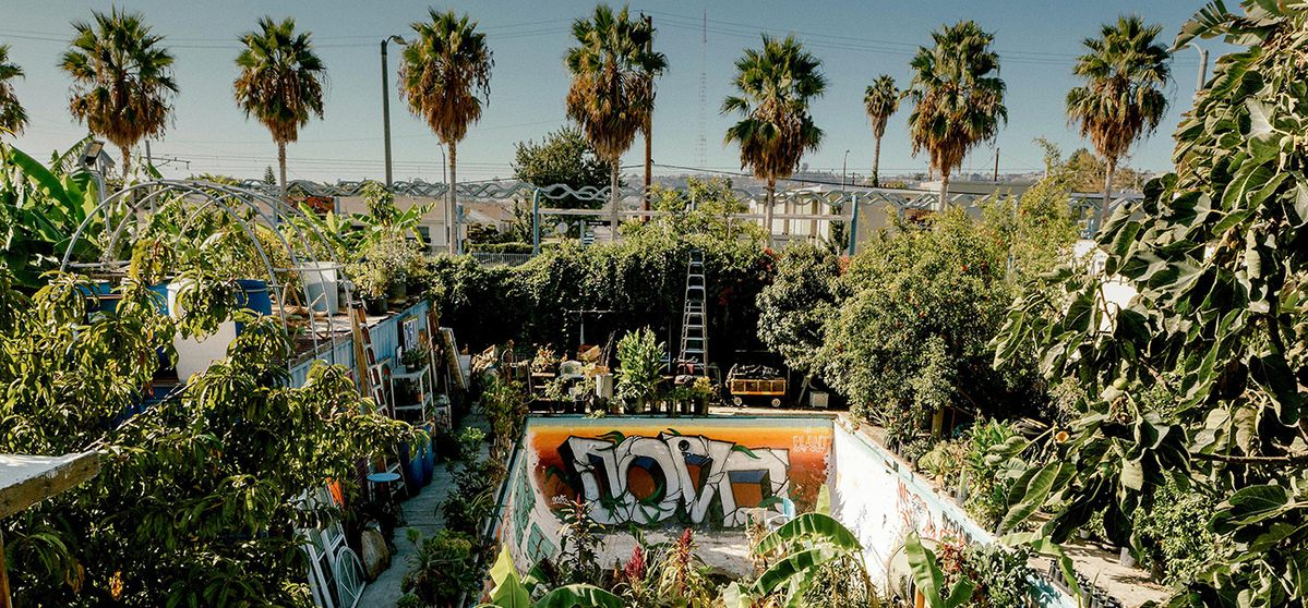 Gangsta's paradise: saving the neighbourhood with vegetables