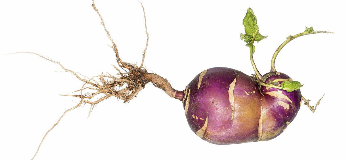 Leaf to Root: savourez vos légumes des feuilles aux racines