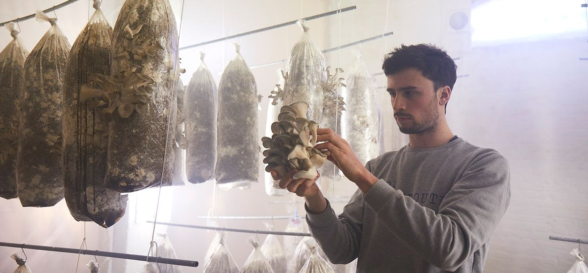 HIGH-END MUSHROOM BREEDING: GROUND FOR OPTIMISM