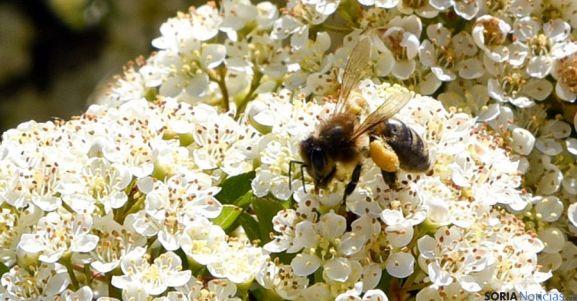Las abejas crean nuevas familias despidiendo a la madre y a las hermanas de mayor edad   https://t.co/PVILkPCmaC https://t.co/v6EVuDmvGt