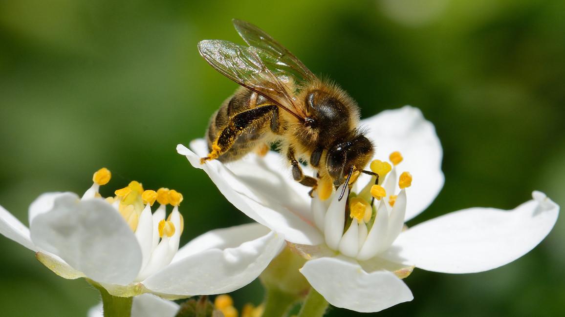 Dem Bienensterben auf der Spur