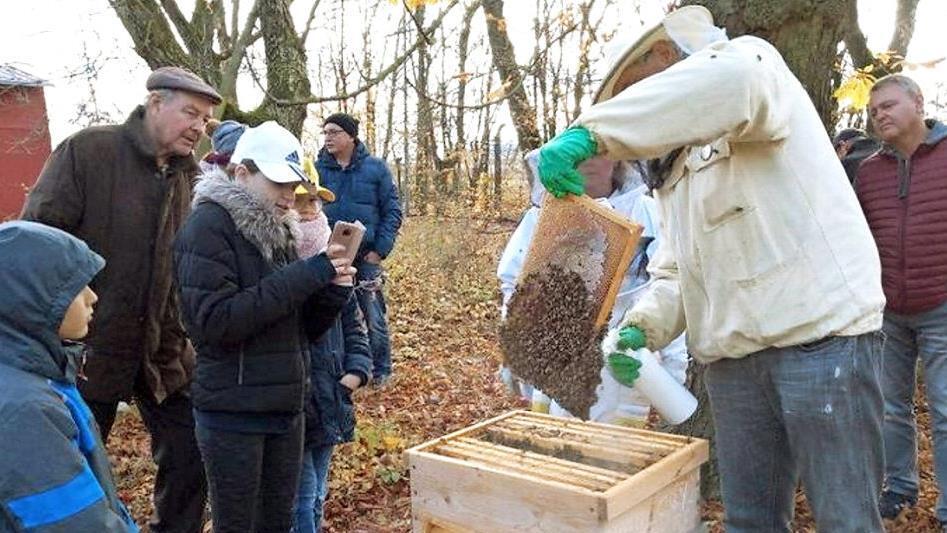 Damit die Bienen überleben
