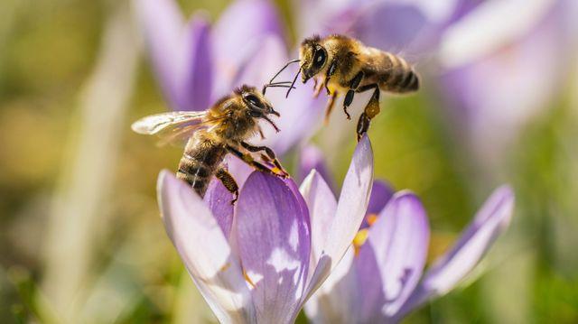 Urban Farming, Bio-Plastik: Wie Bienen die Welt besser machen