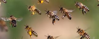 Roboter als Bienen - Science-Fiction oder Wahrheit?
