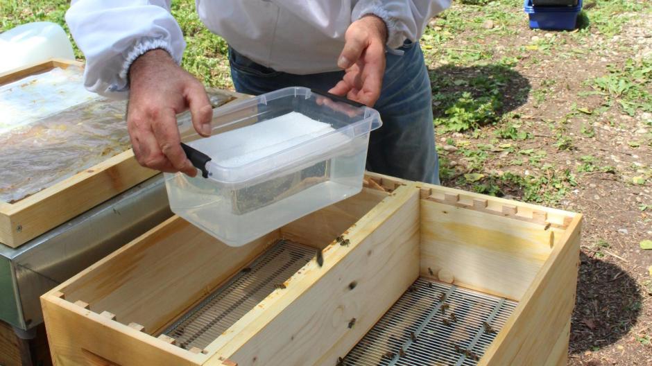 Königsbrunn: Im Hochsommer gibt es für Bienen das Winterfutter
