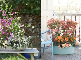 3 Tipps für die richtige Pflanzenauswahl auf dem Balkon oder im Garten