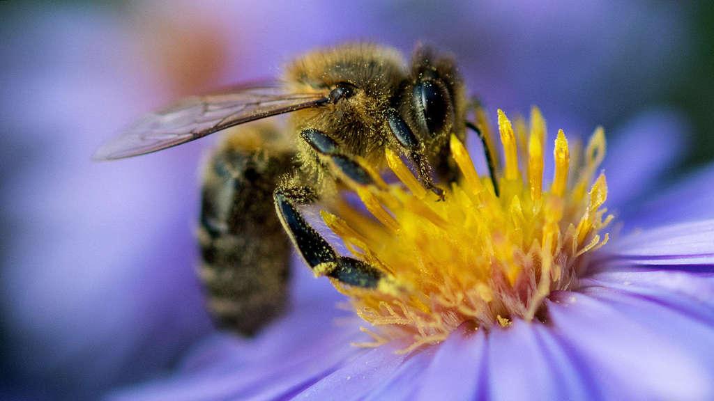 Waldwelt der Honigbienen