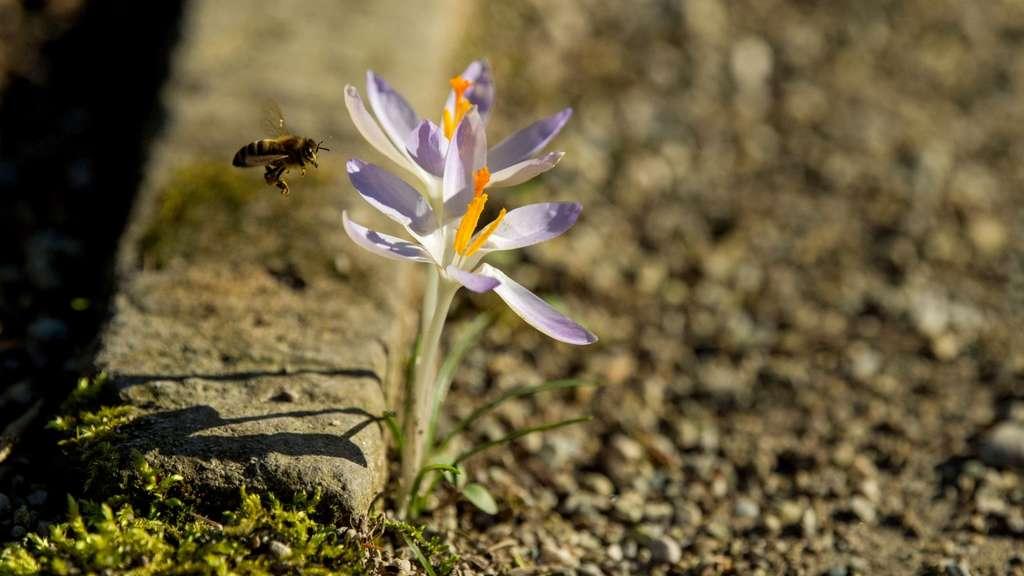 Kein Bienenjahr gleicht dem anderen