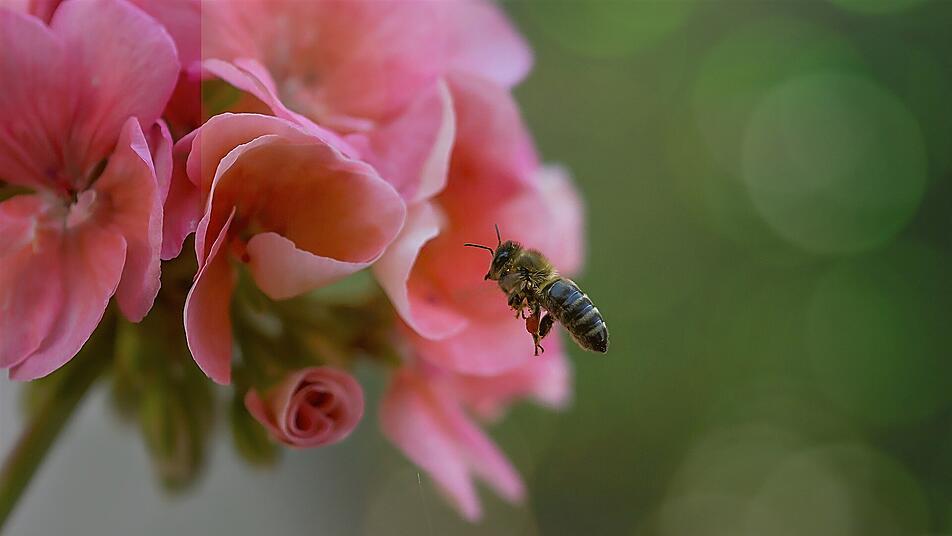 Insekten-Sterben: Warum unsere Bienen wirklich sterben