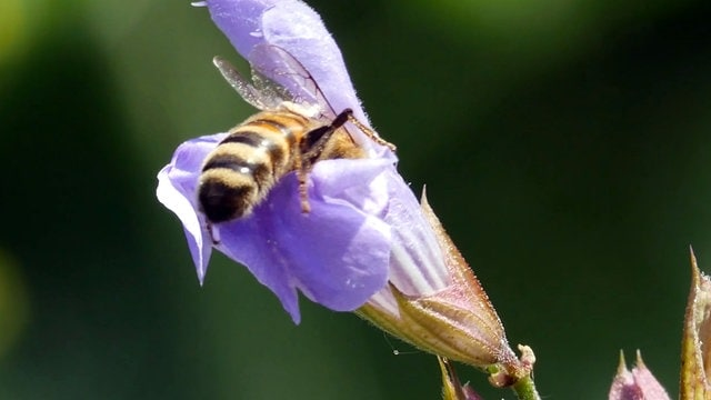 Ohne Bienen keine Landwirtschaft