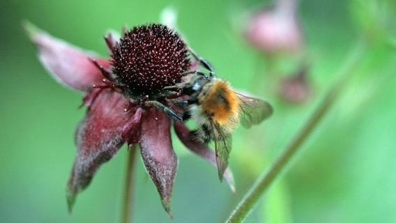 Eine Bienentränke bauen: Wasser für Insekten im Sommer