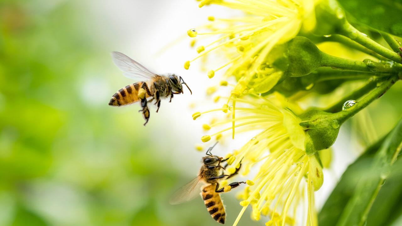 Bienensterben: So helfen Sie Bienen im Frühling und Sommer