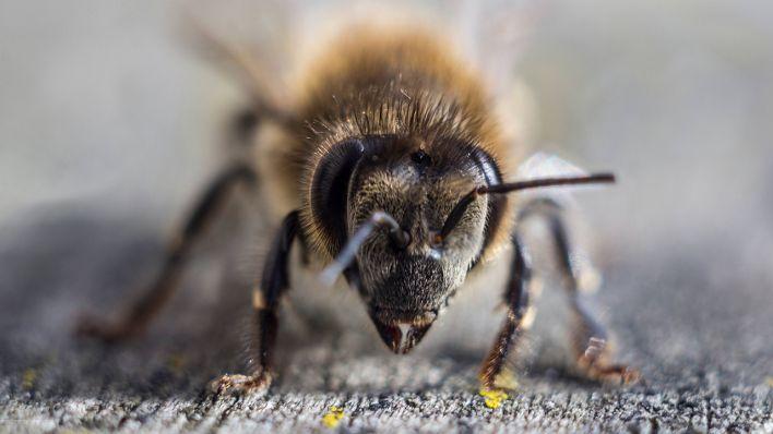 10 Dinge, die Sie tun können, um Bienen zu helfen | rbb|24