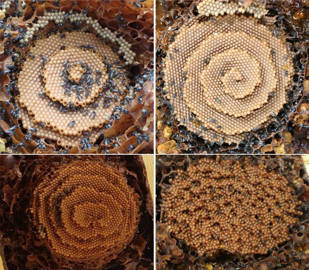 Wie Bienen Spiralen bauen