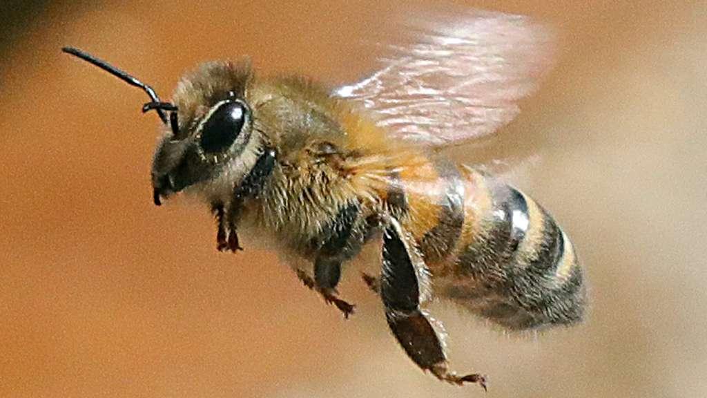 Das machen Bienen in der kalten Jahreszeit