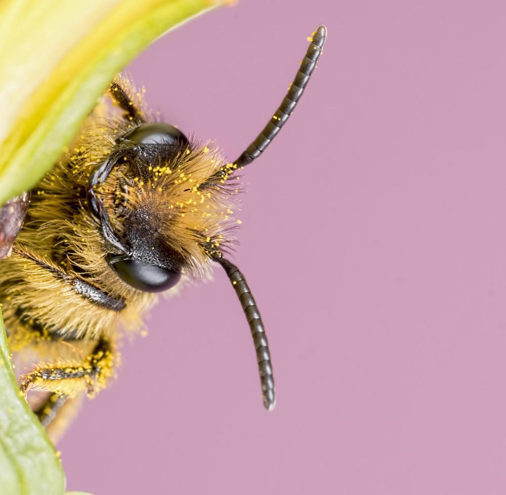 Imker auf Zeit: Bienen kann man sich jetzt auch mieten