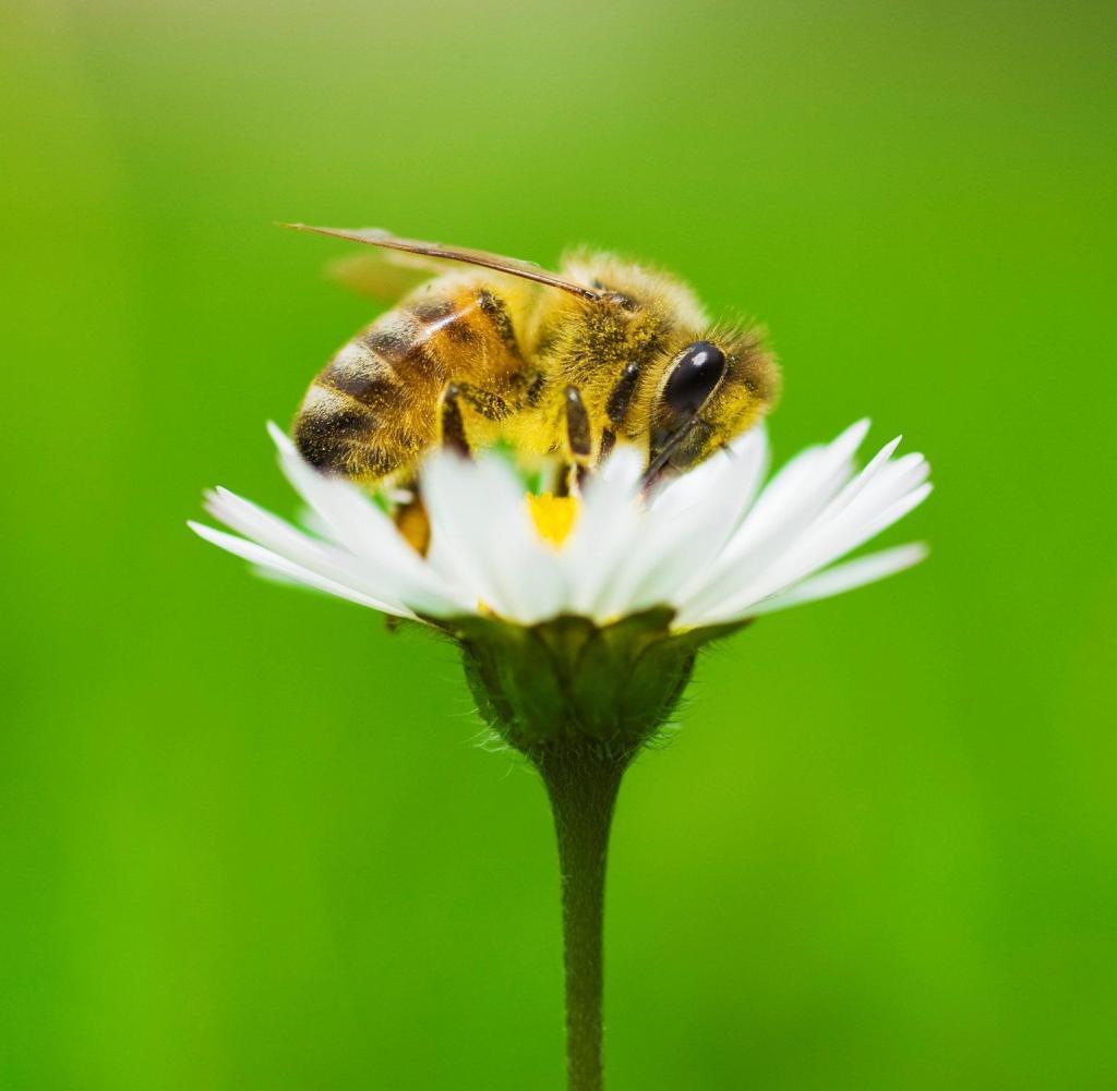 Bienen haben ein Verständnis von Null